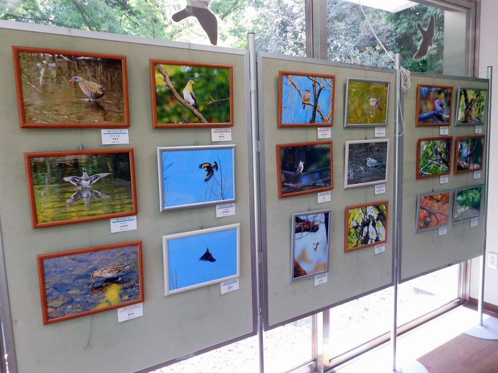 「世田谷の野鳥展」始まりました_b0049307_14043408.jpg