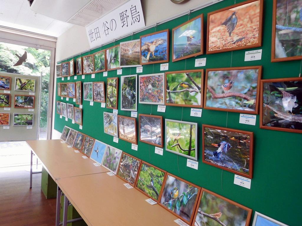 「世田谷の野鳥展」始まりました_b0049307_17530650.jpg