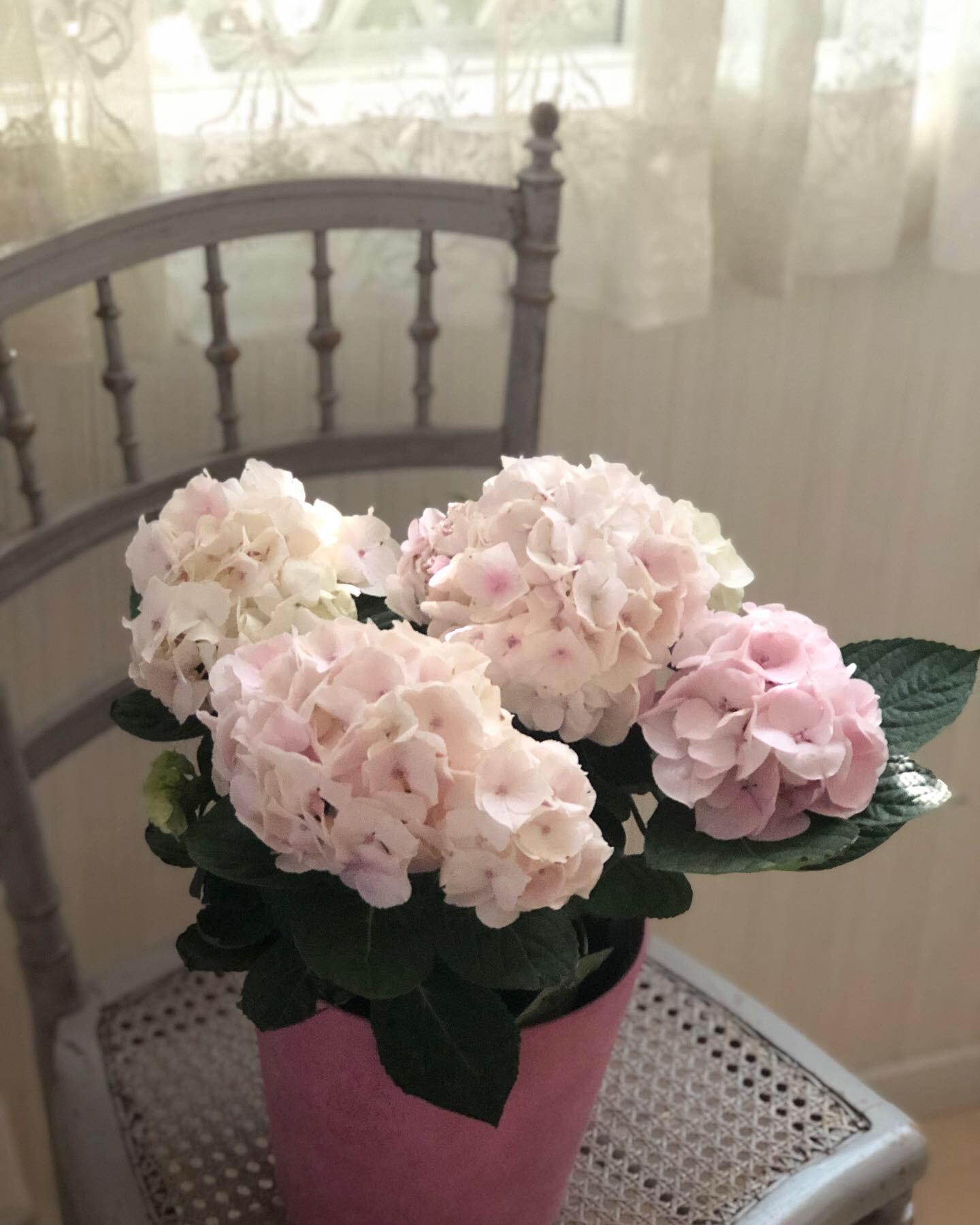 シアワセな母の日をありがとう♡_a0157409_17353802.jpeg