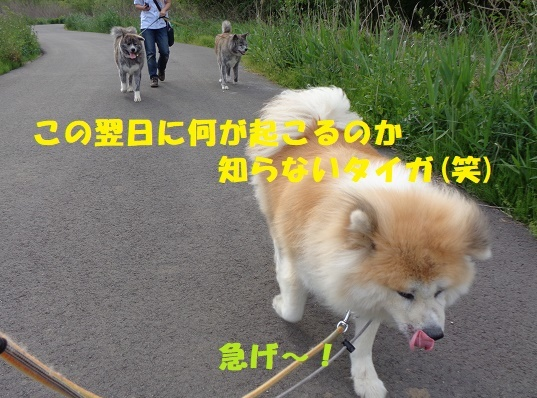 f0121712_23562514.jpg