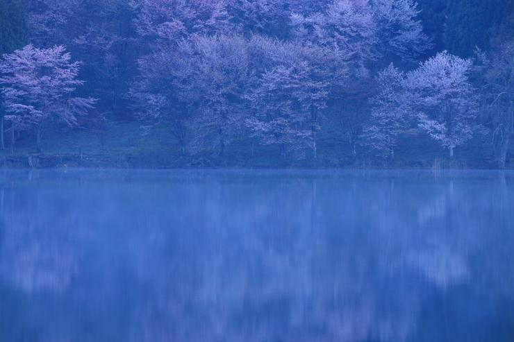 予告 桜・響く 2019~中綱湖オオヤマザクラ~_d0349418_22120445.jpg