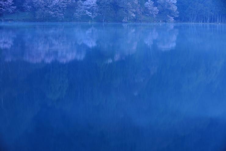 予告 桜・響く 2019~中綱湖オオヤマザクラ~_d0349418_22123593.jpg
