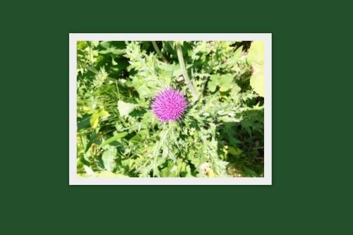 生け花教室へ!_f0139520_08004989.jpg