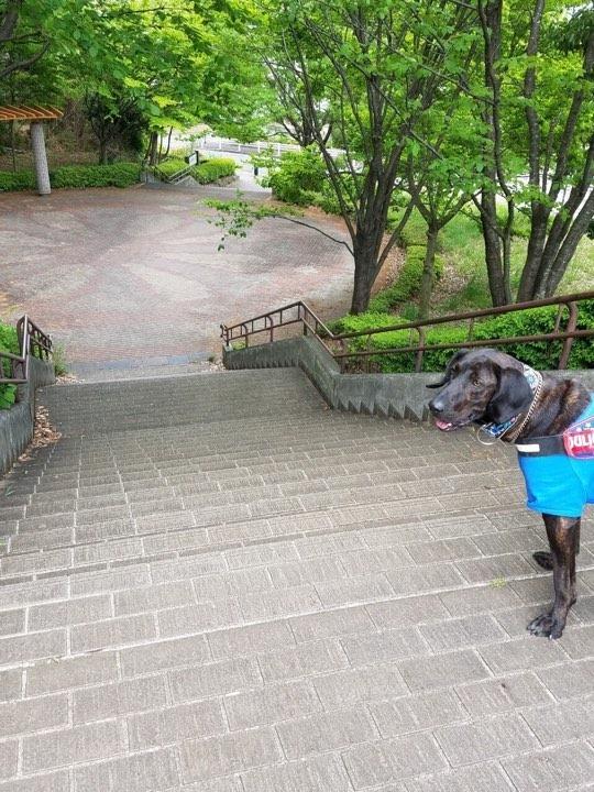 (再)第2回・子豚組パックウォーク@小山内裏公園 開催のお知らせ♪_c0372561_02450171.jpg