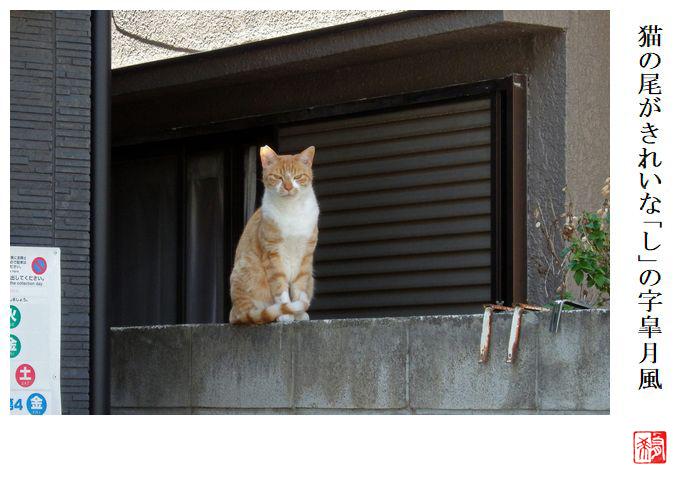 猫の尾がきれいな「し」の字皐月風_a0248481_21454575.jpg