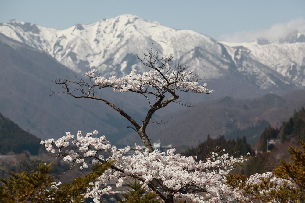 今年を振り返る 4月・群馬桜巡り_e0165983_10281931.jpg