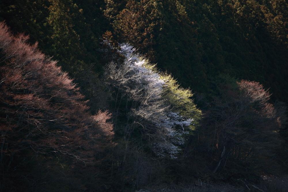 水上町猿ケ京温泉 赤谷湖の新緑とサクラ 後半 _e0165983_10284178.jpg