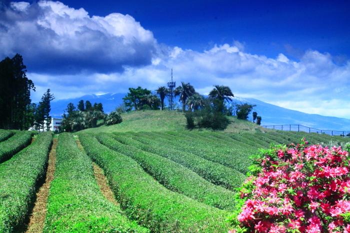 令和元年5月の富士(9)茶畑と雲に隠れた富士_e0344396_22034385.jpg