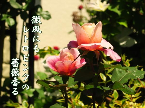 f0137096_20483669.jpg