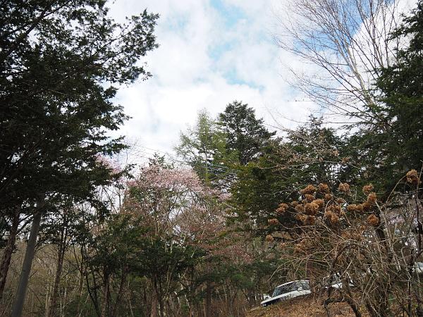 一の瀬高原キャンプ場・春_f0180607_01485327.jpg