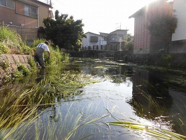 各町内の担当区間によって人数の過不足を調整する必要を感じた田宿川の川そうじ_f0141310_07492832.jpg