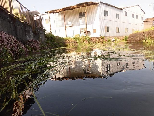 各町内の担当区間によって人数の過不足を調整する必要を感じた田宿川の川そうじ_f0141310_07495124.jpg