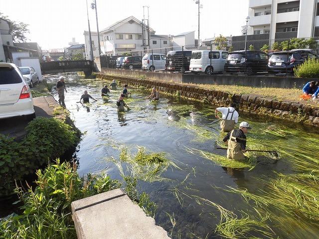 各町内の担当区間によって人数の過不足を調整する必要を感じた田宿川の川そうじ_f0141310_07500035.jpg