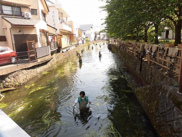 各町内の担当区間によって人数の過不足を調整する必要を感じた田宿川の川そうじ_f0141310_07502475.jpg