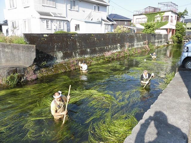 各町内の担当区間によって人数の過不足を調整する必要を感じた田宿川の川そうじ_f0141310_07505264.jpg