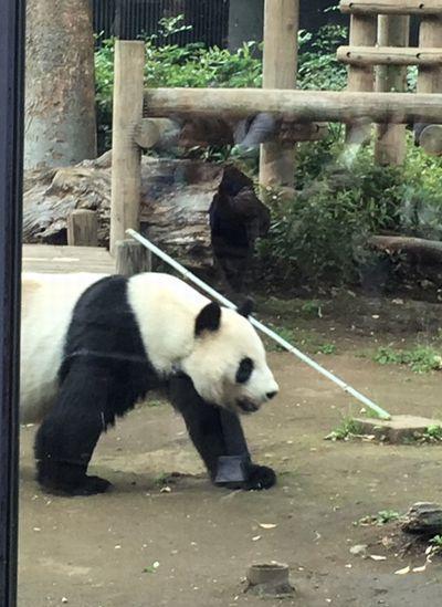数十年ぶりの動物園_e0234016_17190160.jpg
