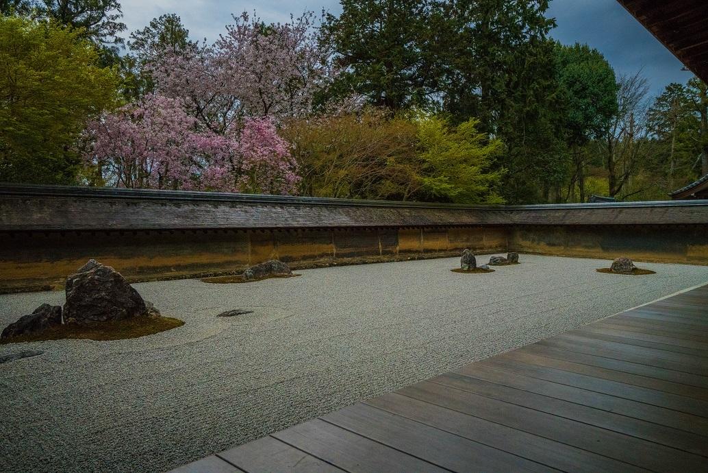 2019京都桜~龍安寺_e0363038_10210509.jpg