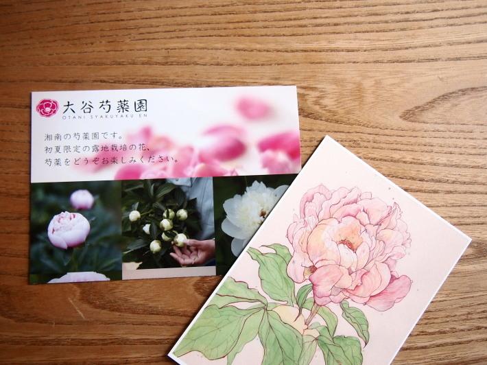 シャクヤクの香りに包まれて☆_c0152341_07135424.jpg