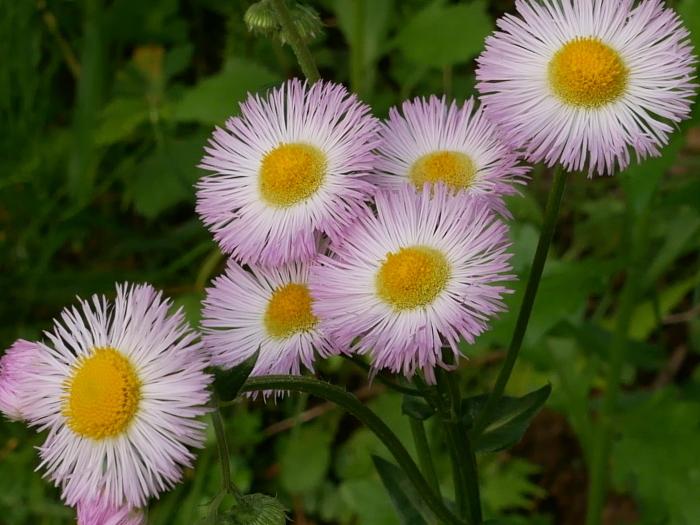 春の花の紹介_c0228241_00192670.jpg
