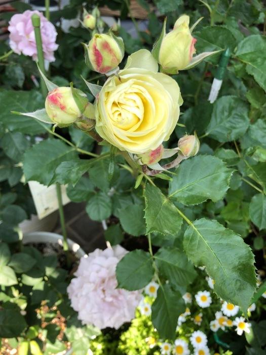 5月の花_c0012247_01392703.jpg