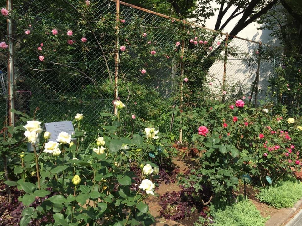 2019年5月の月例会/花柄摘み、雑草とり_a0094959_02083799.jpg