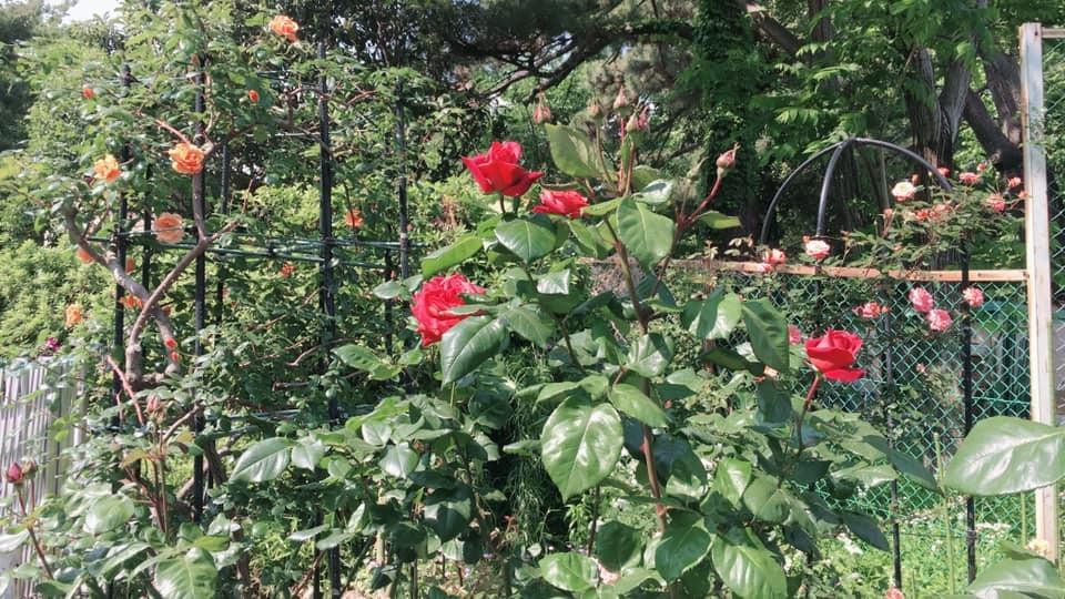 2019年5月の月例会/花柄摘み、雑草とり_a0094959_02083998.jpg