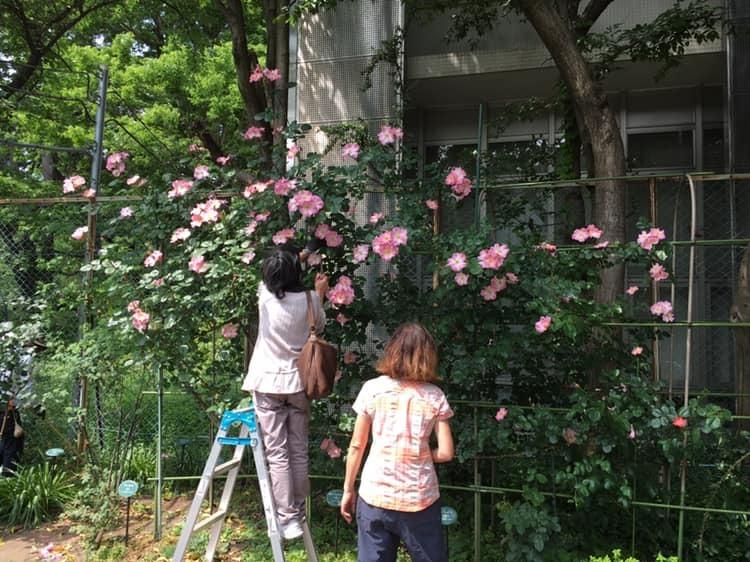 2019年5月の月例会/花柄摘み、雑草とり_a0094959_02104797.jpg