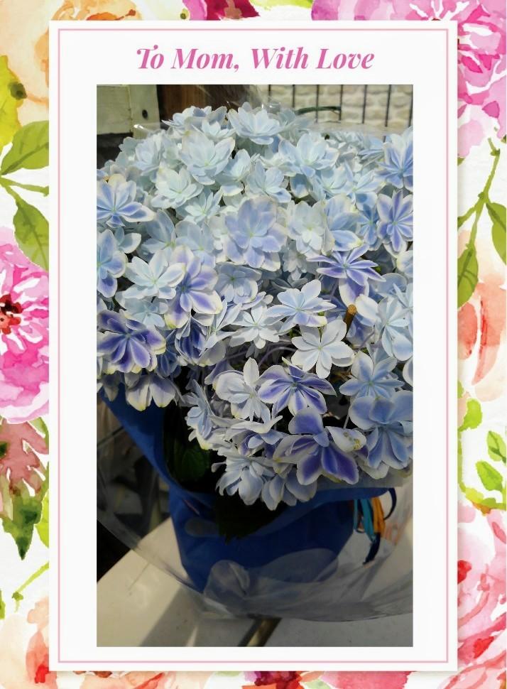 Thanks Mother\'s Day!!!_b0133771_16181820.jpg