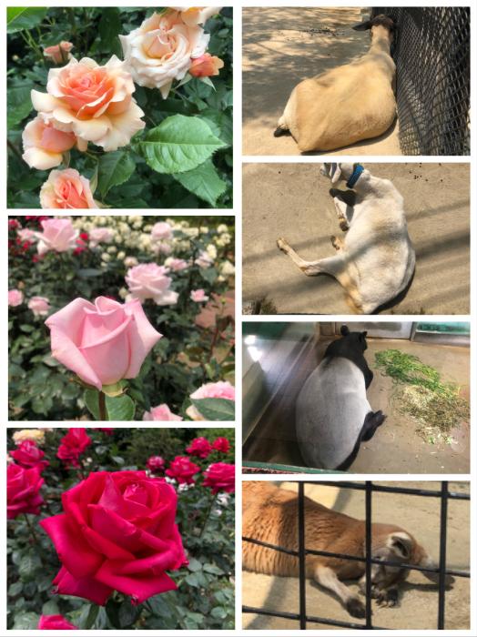 動植物園。_a0157480_10480237.jpeg