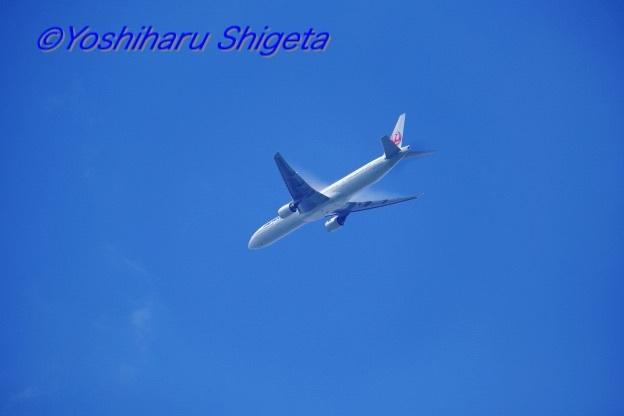 〜鶴丸〜_c0152400_06395612.jpg