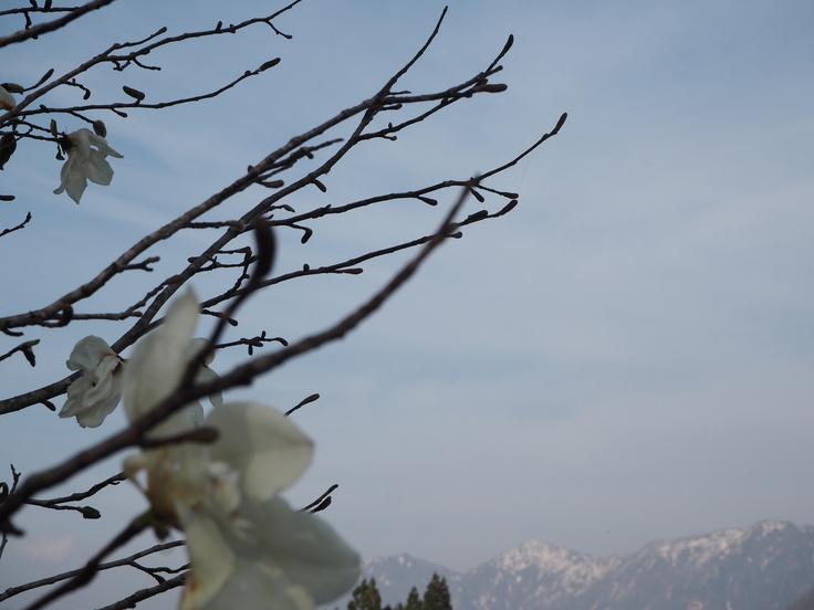 花たちと山々 ♪ (オットとプチ旅☆思い出)_c0212604_21374468.jpg