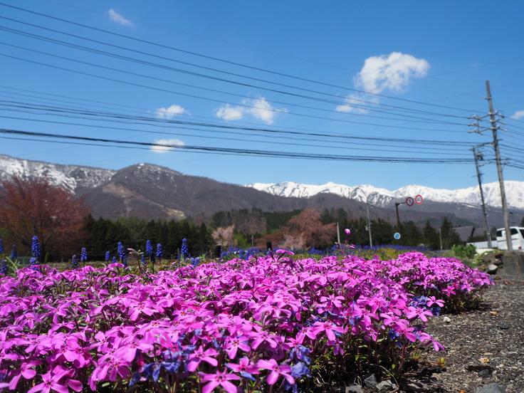 花たちと山々 ♪ (オットとプチ旅☆思い出)_c0212604_2144219.jpg
