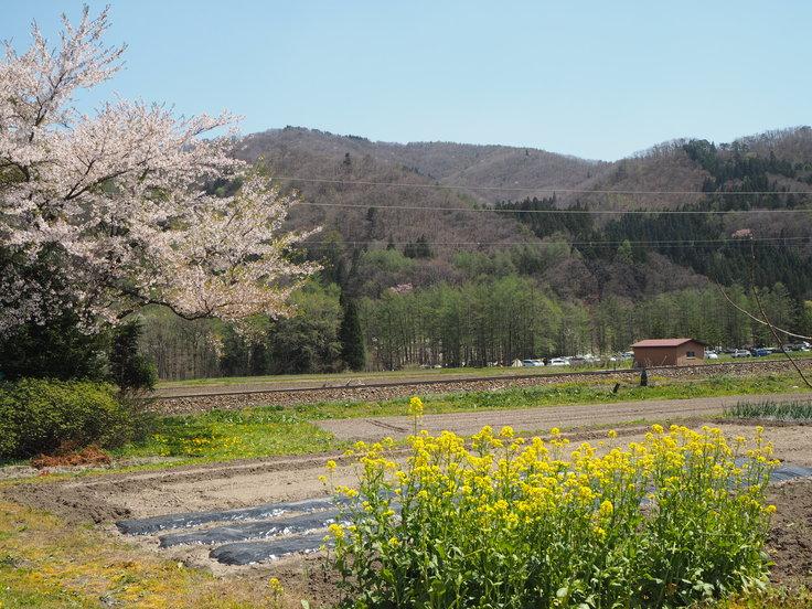 花たちと山々 ♪ (オットとプチ旅☆思い出)_c0212604_2150740.jpg