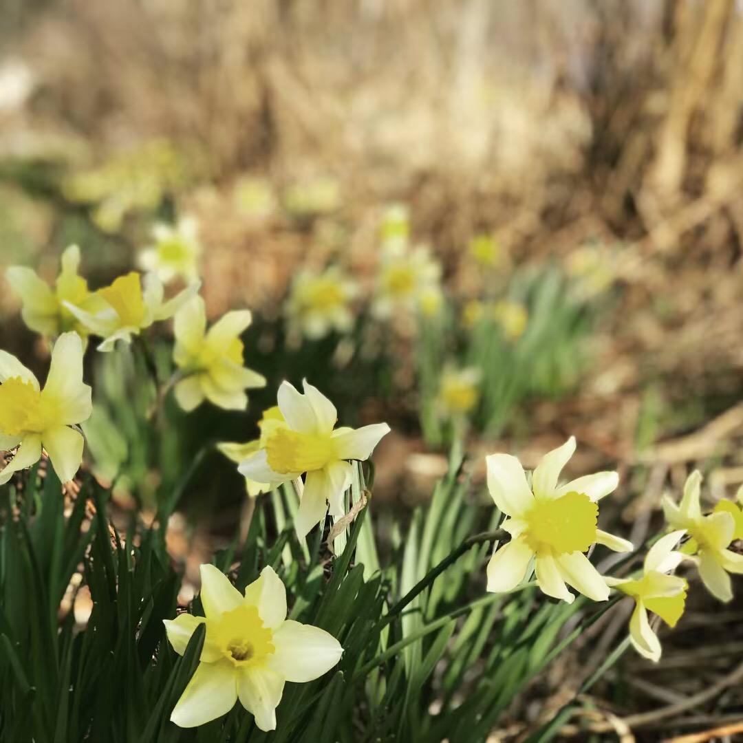 花たちと山々 ♪ (オットとプチ旅☆思い出)_c0212604_21582974.jpg