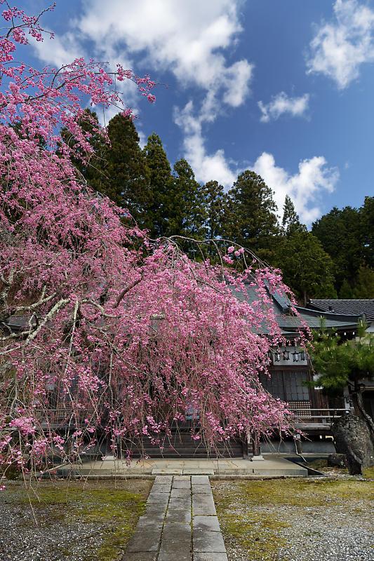 桜巡り2019@京北 大聖院_f0032011_20250730.jpg