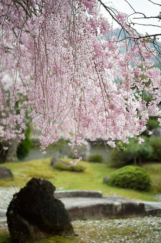 桜巡り2019@京北 大聖院_f0032011_20250808.jpg