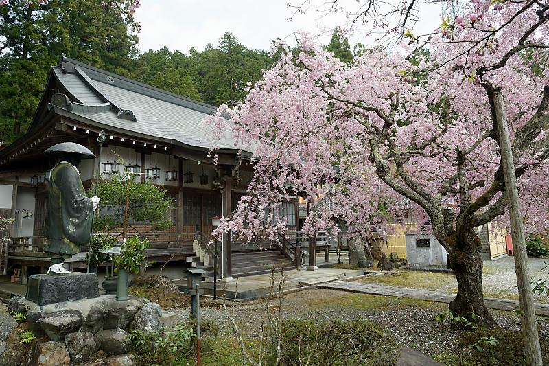 桜巡り2019@京北 大聖院_f0032011_20250873.jpg