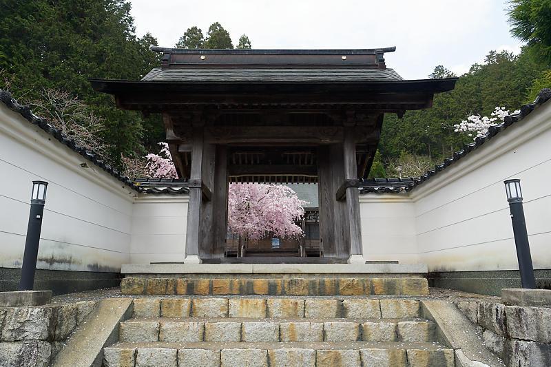 桜巡り2019@京北 大聖院_f0032011_20250894.jpg