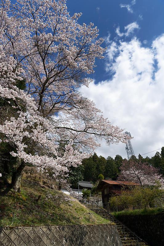 桜巡り2019@京北 大聖院_f0032011_20282007.jpg
