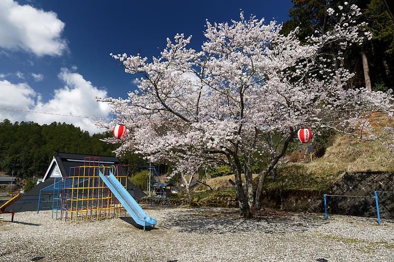 桜巡り2019@京北 大聖院_f0032011_20282024.jpg
