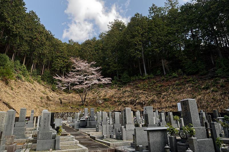 桜巡り2019@京北 大聖院_f0032011_20282069.jpg