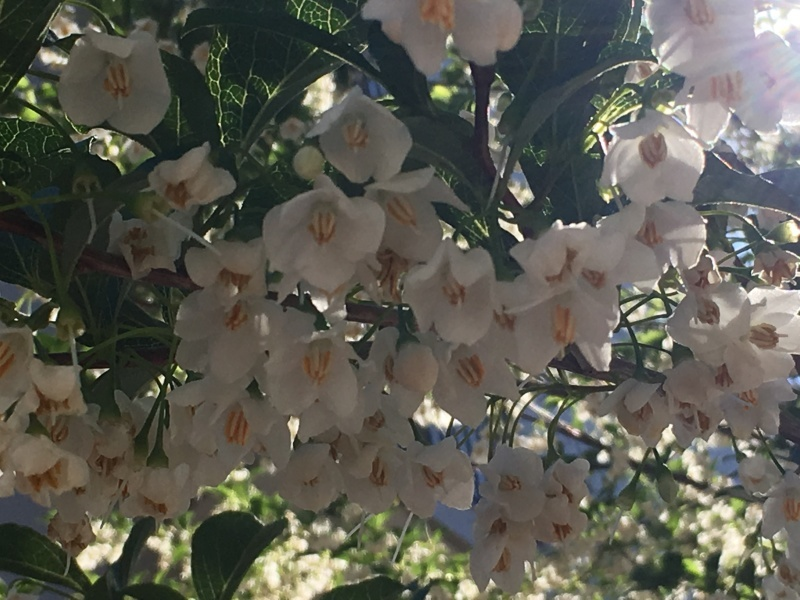 香りと太陽はセット NO.635_c0102513_20595259.jpeg