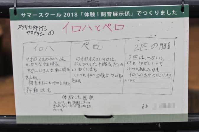 秋の井の頭~尻尾を追いかけるホンドテン( September 2018)_b0355317_22512832.jpg
