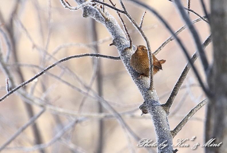 北の大地の残り物・・^^; 雪の中の小鳥たち♪_e0218518_20453871.jpg