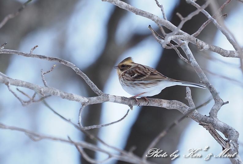 北の大地の残り物・・^^; 雪の中の小鳥たち♪_e0218518_20465841.jpg