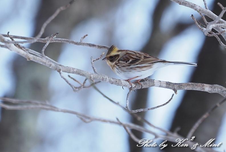 北の大地の残り物・・^^; 雪の中の小鳥たち♪_e0218518_20471253.jpg