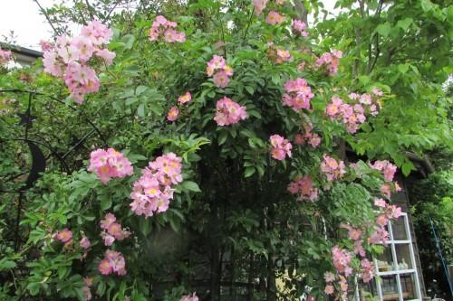 庭の花!_f0139520_14321143.jpg