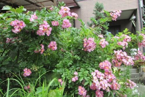 庭の花!_f0139520_14323158.jpg