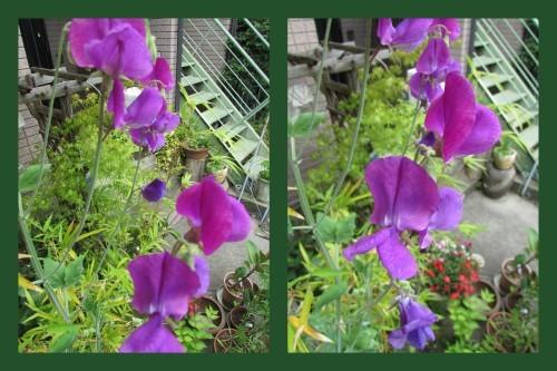 庭の花!_f0139520_14331908.jpg