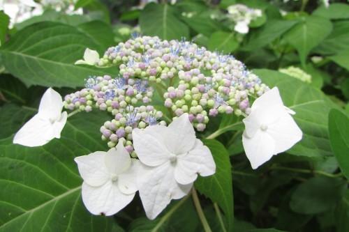 庭の花!_f0139520_14341657.jpg